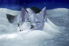 warriors cats mosskit - Google Search