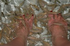 Doctor fish treatment in Siem Reap's night market. My feet have never felt so soft.