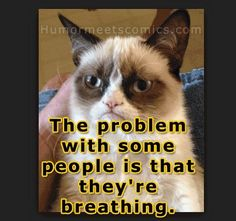 And their breath stinks | Community Post: 14 Hilarious Grumpy Cat Memes That Will Make You Smile