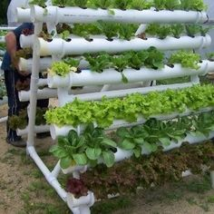 structurer un jardin vertical