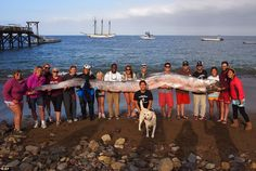 The 18-foot-long oarfish found dead in the water off Catalina Island near Los Angeles