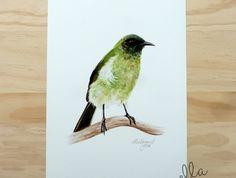 *Korimako / Bellbird - a fine art giclee print by ellaquaint Watercolor Techniques, Giclee Print, Felt, Illustrations, Fine Art, Bird, Animals, Felting, Animales
