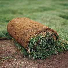 When it comes to getting a thick, healthy lawn, nothing beats sod for instant gratification. Learn how to prepare soil for sod and beautify your yard at This Old House. How To Lay Sod, Sod Grass, Zoysia Grass, Grass Rolls, Sod Installation, Lawn Care Tips, Thing 1, House Landscape, Gardening Gloves