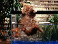 Strange Wet Cat In A Fish Tank