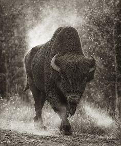 majestic beast