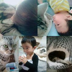 #アメリカンショートヘア の#愛猫 と #1歳8ヶ月 の #息子 は#仲良し  日頃は#微妙な距離感 だけど どちらかが寝てると片方がひっついていく(笑) 息子は #鼻風邪 ひいてしまった… #熱はなし #食欲あり #基本元気 ただ少し#鼻水 この季節は#体調管理 難しいなぁ…  #アメショー #シルバータビー #猫 #にゃんにゃん #猫と子供 #猫と暮らす #猫との暮らし #男の子 #男の子ママ #イヤイヤ期真っ只中  #あんよが出てますよ #牛乳 飲む息子を #見守る猫 #ひっつく #ピタッ #耳鼻科通院中  #ティッシュ は #鼻セレブ