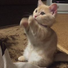 Please sir my I have some more?   cats funny pictures