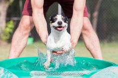 Georgia Jack Russell Rescue, Adoption and Sanctuary | Fritz #cutest #jackrussell…