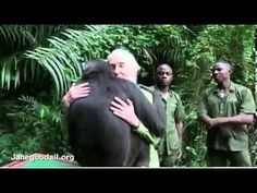 Jane Goodall Is Hugged By Rescued Chimp.Touching! Jane Goodall only met this chimp during the transport but she received the hug before he left! Tears...