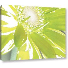 ArtWall Herb Dickinson Gerber Time IV Gallery-wrapped Canvas, Size: 14 x 18, White
