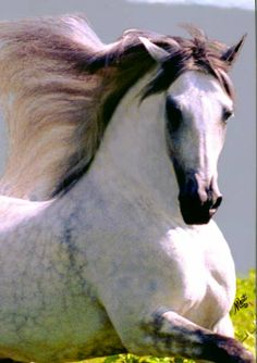 Call me crazy but I would take a purebred andalusian stallion over any car even a 458.