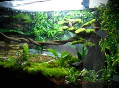 Crested Gecko and his awesome set up Vivarium Reptile House, Reptile Habitat, Reptile Room, Reptile Cage, Gecko Terrarium, Aquarium Terrarium, Garden Terrarium, Terrarium Ideas, Aquascaping
