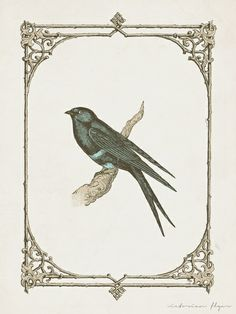 antique bird