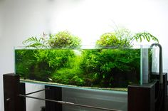Gaia Italia, floating stand, planted aquarium ada
