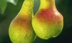 The Beauty of Pears