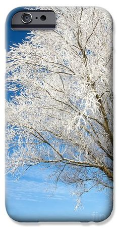 Tree covered with snow and frost. iPhone 6 Case  I shot this image on a extreme cold winter morning. It had been a misty morning with a lot of moist in the air which as a result that the foggy freeze to form rime on the tree and it's branches.