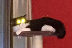 Spooky cat! This is not edited. Lol