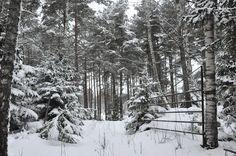 A walk in a swedish forest. Bettinas blad