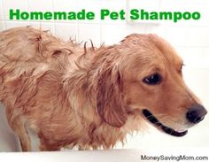 Homemade Pet Shampoo     1 cup liquid dish soap     1 cup apple cider vinegar     1/3 cup glycerin     4 cups water Why apple cider vinegar?  In fact, once his fur is dry, apple cider vinegar deodorizes and shines his coat. It also repels fleas. I'm thing natural dish soap and coconut oil instead of glycerine.   For extra luxury and a sweet smell, try adding a couple drops of rosemary, lavender or other essential oil. Or, you can boil a few fresh rosemary stems