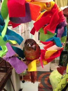 Homemade snuggle perch diy bird toy made by debbie w