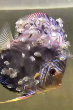 Animated GIF - Big fish and his kids Funny Animal Videos, Cute Funny Animals, Cute Baby Animals, Underwater Creatures, Ocean Creatures, Beautiful Sea Creatures, Animals Beautiful, Nature Animals, Animals And Pets