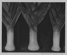 "Edward Weston ""Leeks"" (1927) Center for Creative Photography, Tucson, Arizona"