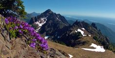 Olympic National Forest :Mount Ellinor