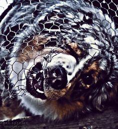 My crazy dog Olliwer!