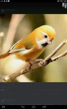 Cute little bird. Wish I knew what kind it is.