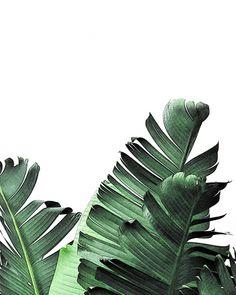 #tropical #art #botanical #bananaleaf #leaf #wallart #botanicaltrend #botanicalart #palmleaf
