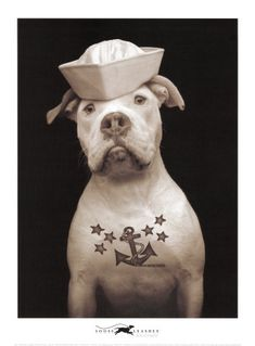 sailor pup @Olivia García Rauen is he our cousin too?? he has a anchor tattoo??