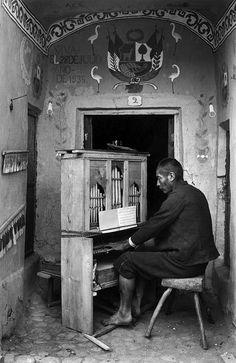 Martin Chambi,  the organist
