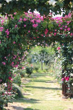 garten - rosenbogen - pflanzbogen ideen | garten - rosenbogen, Garten dekoo