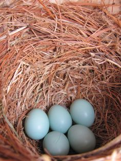 Clean out bluebird nesting boxes for new inhabitants in the spring! Spring gardening tips from the The Inn at Honey Run