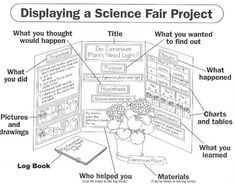 Science Fair Project Display