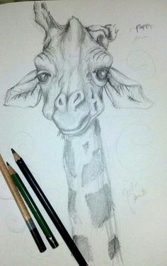 animal Art . Cutie giraffe sketch.   Pencil drawing of Giraffe from Brookfield Zoo, Chicago.  One floppy horn.  His silliness makes me love him more.  Now to paint him.  by Fine Artist Kit Sunderland. www.kitsunderland.com or https://www.facebook.com/pages/Kit-Sunderland-Fine-Artist/141759050719?ref=hl