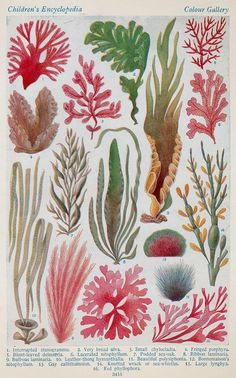 All sizes | brittish seaweed family d | Flickr - Photo Sharing!