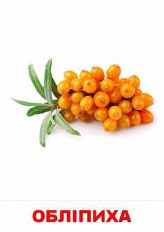 Planting Vegetables, Veggies, Develop Pictures, Plant Drawing, Russian Language, Fruit Plants, Clip Art, Food, Otters