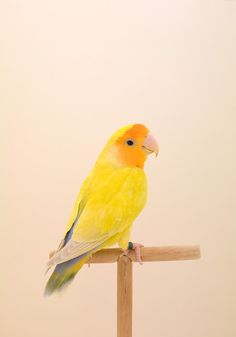 The Incomplete Dictionary of Show Birds photographed by Luke Stephenson