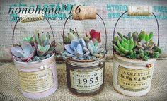 1 million+ Stunning Free Images to Use Anywhere Succulent Gifts, Succulent Gardening, Planting Succulents, Container Gardening, Vasos Vintage, Plant Crafts, Tin Can Crafts, Altered Tins, Free To Use Images