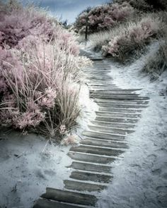 Could this be my garden path?