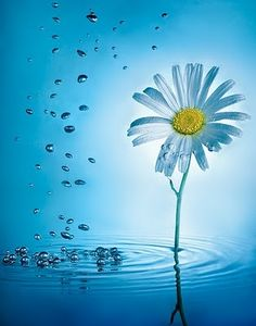 500636 pixels 500636 pixels The post 500636 pixels appeared first on Fotografie. Daisy Wallpaper, Nature Wallpaper, Wallpaper Backgrounds, Water Flowers, Flowers Nature, Pretty Flowers, Blue Flowers, Daisy Love, Daisy Daisy