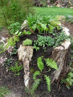 stump planter when planted. Tree stump planter when planted.Tree stump planter when planted. Lawn And Garden, Garden Art, Garden Design, Fairies Garden, Tree Stump Planter, Log Planter, Tree Stump Decor, Woodland Garden, Garden Planters