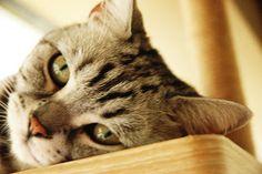 Cat Cafe, South Korea Cat Cafe, South Korea, Cute Animals, Cats, Pretty Animals, Gatos, Kitty Cats, Cutest Animals, Cute Funny Animals