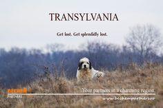 Get lost in Transylvania. Tourism, Trust, Inspiration, Cousins, Turismo, Biblical Inspiration, Inhalation, Travel