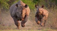 A safari in Kruger Park, South Africa.