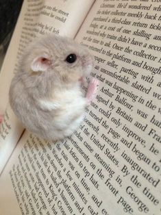 Adorable little hamster hanging of a book.I find these hamsters so cute Cute Little Animals, Cute Funny Animals, Cute Dogs, Cute Babies, Cute Hamsters, Chinchillas, Hamsters For Sale, Robo Dwarf Hamsters, Cute Animal Pictures
