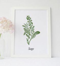 Sage Leaves Isolated, Kitchen Herb Wall Decor, Kitchen Herbs Print, Sage Leaf Print, Garden Decor, Plant Label, Botanical Illustration Art