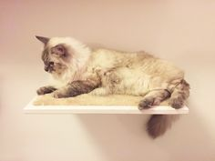 Handmade made in Italy wooden cat shelf with removable plush by www.athleticat.it