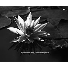 If your mind is ready, understanding arises. —Sayadaw U Tejaniya (photo by Hor Tuck Loon) Meditation, Mindfulness, Plants, Plant, Consciousness, Planets, Zen